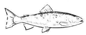 Fisch Restaurant in Bad Aibling